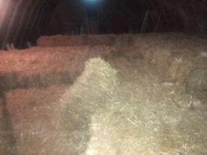 2018 wheat straw small bales