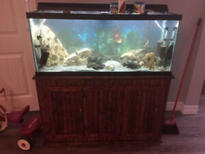 75 gallon fish tank with costum made stand.