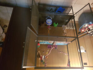 Sugar gliders and cage and toys for sale