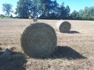 LOCAL Hay Bale for sale