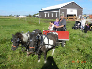 Miniature horse team, wagon, harness and sleigh