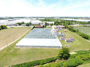 Great Greenhouse Opportunity - 324 Erie St. N, Leamington