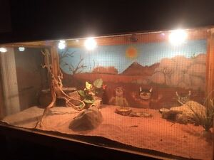 Bearded Dragon w/cage and all accessories $200