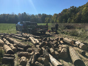 Firewood dry split ash delivered