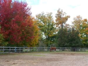 Horse boarding available at Private farm in Flamborough