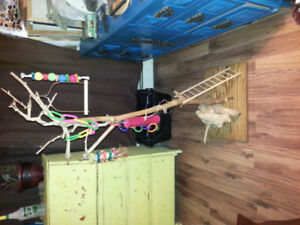 Bird jungle gym! Motivated seller