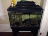 Fish tank and fish - MUST GO