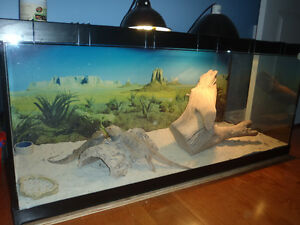 Bearded Dragons with Aquarium