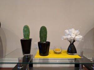 Pear cactus(pot not included)