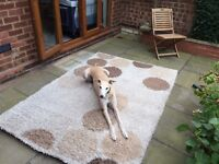 2.3 x 1.6m Rug. Loose/Long pile. May contain pets!
