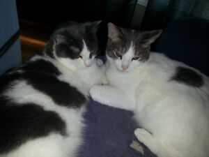 FREE: Two adorable cats looking for new home!