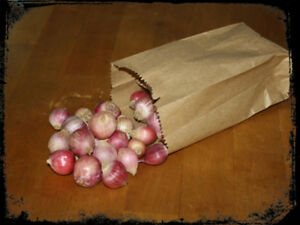 NOW AVAILABLE, grow your own Gourmet Garlic Balls, buy the seed