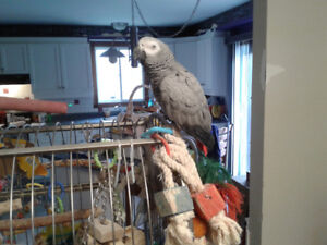 Volunteers needed to help disabled lady look after pet birds.
