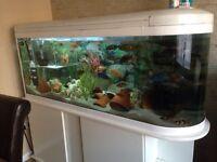 Fish Tank & cabinet 150cm