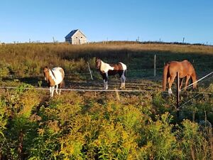 HORSE BOARDING, YOUNG HORSE TRAINING AND RIDING LESSONS