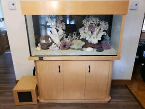 Aquarium d'eau salée 90 gallons tout équipé avec meuble