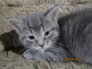 Chatons / Kittens 450.515.5400 no email or text message