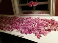 A real !,,,,Bed of Roses,