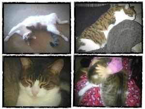 2 MALE CATS LOST Peterborough Peterborough Area image 2