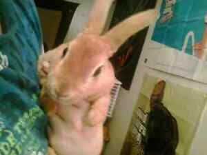 BIG SALES ON RABBITS N BUNNIES INBOX ME IN PRIVATE FOR INFO OR T