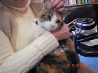 "SWEET CALICO ""HOPE"""