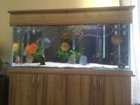 Fish tank 5x2x2 with cabinet lights etc