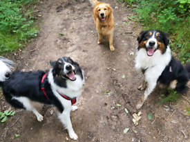 The Wag Pack - Dog Walker / Walking / Visits