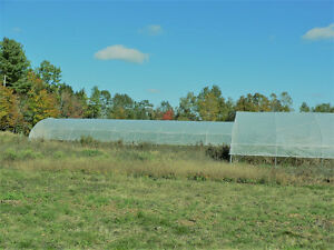 96' and 36' greenhouses (cold frames)