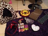 Large cat kitten items bundle bed toys scratchers bowl brush harness and lead treats
