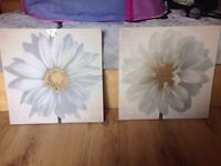 2 cream flower canvas