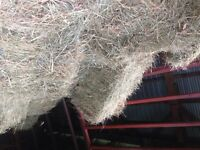Good horse hay for sale