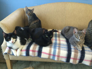 Volunteers needed for animal shelter in St. Thomas! London Ontario image 8