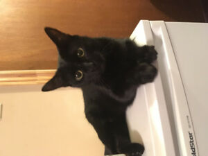 **Beautiful black female cat to rehome