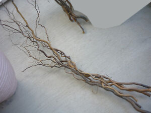 Curly Branches .. Decorative, Perches for Birds, Lizards: 6 feet Cambridge Kitchener Area image 1