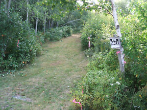 Land For Sale at 486  Cumberland County (Reduced)