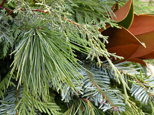Looking for Greenery  -  Trimmed your cedar hedges?? Evergreens?