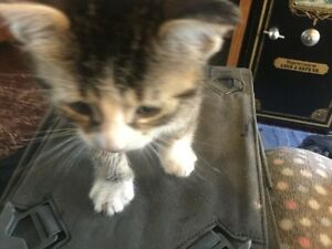 Kittens and cats needing good homes
