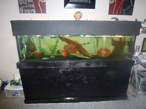125 gallon fish tank 6ft long with discus fish