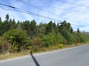Large private treed lot , Witless Bay 25 mins to city ! St. John's Newfoundland image 4