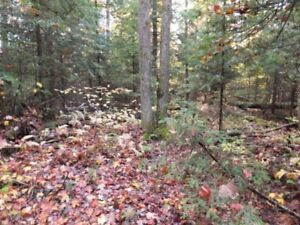 SPECTACULAR FOREST ESTATE IN HALIBURTON - $294/month