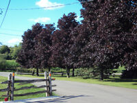 Country Bungalow close to Hamilton
