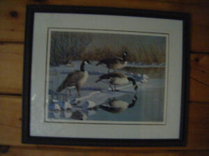 Geese Images Limited Edition Print