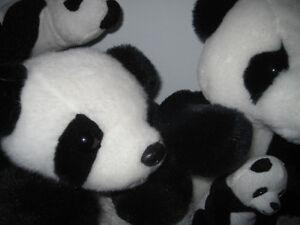 Another Family of Pandas Needing a Loving Home