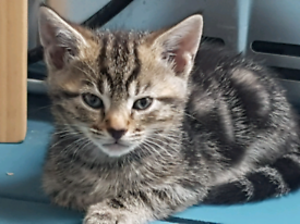 Lovely little kittens needs a new home