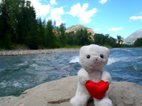 Lost Teddy Bear / Ours en peluche perdu, $250 reward