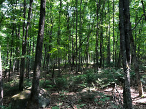 100 acres for sale in Burks Falls