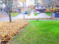 LEAF REMOVAL YARD CLEAN UP COLLINGWOOD AND SURROUNDING AREA