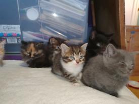 9 beautiful kittens