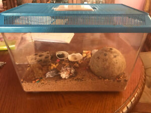 2 hermit crabs - FREE to a good home