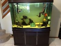 120 gal. Aquarium with stand and acc.
